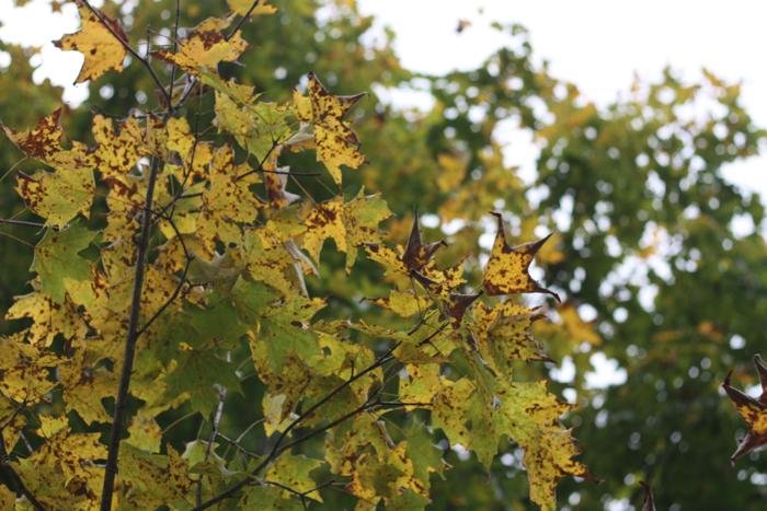 Letting the seasons fall