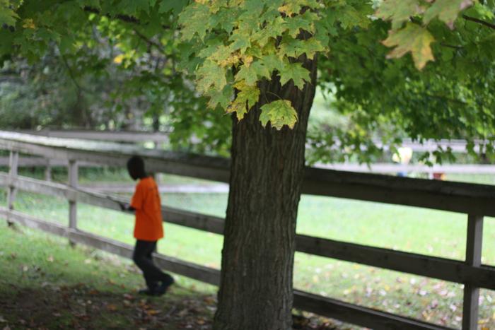 Seasons fall2